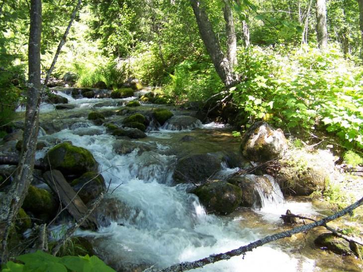 Evans Creek - photo by Walter Swetlishoff