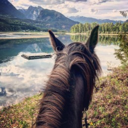 Neck of a horse with mountain lake scenery