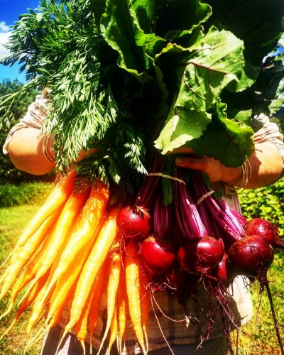 farmer holds bunch of beetroot and carrots